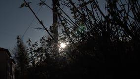Les rayons du soleil font leur voie par les buissons dans la ville Bel éclat du soleil sur le fond des buissons et du paysage urb banque de vidéos
