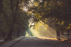 Les rayons du soleil font leur voie par les arbres, sont tombés sur la route Photos stock