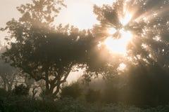 Les rayons du soleil s'étendent par les branches photos libres de droits