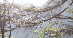 Les rayons du soleil sont jet brillant les arbres dans la forêt banque de vidéos