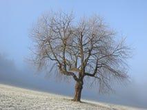 Les rayons du soleil traverse les arbres image libre de droits