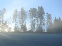 Les rayons du soleil traverse les arbres Photo stock