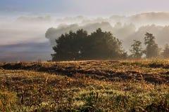 Les rayons ensoleillés ont jeté un coup d'oeil au-dessus des cimes d'arbre dans le matin de début de l'été Images libres de droits
