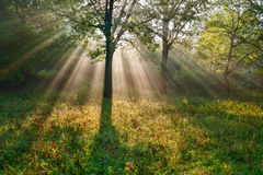 Les rayons lumineux du soleil Photographie stock libre de droits