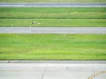 Les rayures de la piste de roulement et de l'herbe verte à l'aéroport Image libre de droits