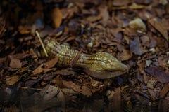 Les reptiles sont intelligents trop comme celui-ci photo stock