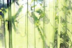 Les rideaux transparents verts Ombre évidente derrière des feuilles Fond photo stock