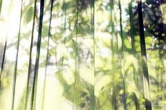 Les rideaux transparents verts Ombre évidente derrière des feuilles Fond photo libre de droits