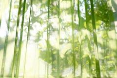 Les rideaux transparents verts Ombre évidente derrière des feuilles Fond photos libres de droits