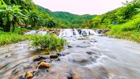 Les rivières dans de grandes forêts sont abondantes Images libres de droits