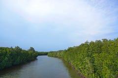 Les rivières des sources naturelles traversent des palétuviers Image libre de droits