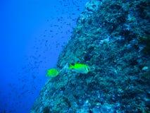 Les roches et le poisson et le paysage de corail en mer ondule l'eau dans thaïlandais Photos libres de droits
