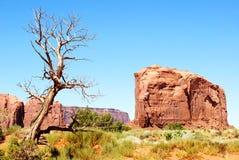 Les roches et les trois Photos libres de droits