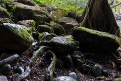 Les roches humides Photos libres de droits