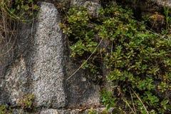 Les roches murent avec les usines sauvages là-dessus Image libre de droits