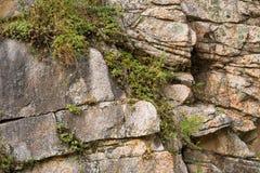 Les roches murent avec les usines sauvages là-dessus Photographie stock libre de droits