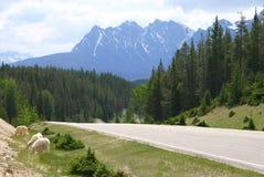 Les Rocheuses canadiennes II image libre de droits