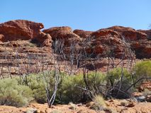 Les Rois australiens Canyon Photo stock