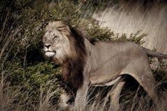 Les Rois Bush Photographie stock libre de droits