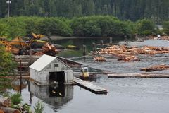 Sorte de rondin, île de Vancouver, Colombie-Britannique Photos libres de droits