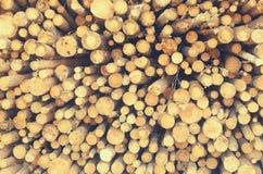 Les rondins abattus des arbres dans la scierie sont empilés image stock