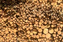 Les rondins abattus des arbres dans la scierie sont empilés photo stock