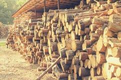 Les rondins abattus des arbres dans la scierie sont empilés photos libres de droits