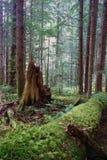 Les rondins tombés par forêt tropicale se sont décomposés tronçon Moss Covered Tree Trunk Photo libre de droits