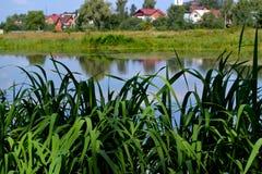 Les roseaux à la rivière photographie stock
