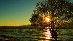 Les roseaux de noir sur le fond de coucher du soleil banque de vidéos