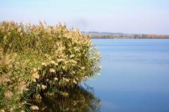 Les roseaux ont cintré au-dessus de la surface douce du lac Images stock