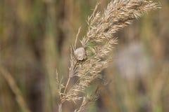 Les roseaux pendant l'automne au soleil Photographie stock libre de droits