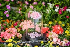 Les roses roses éternelles dans le flacon sur le jardin Photos libres de droits