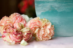 Les roses antiques de Pierre de ronsard s'approchent du pot en verre bleu vert Image libre de droits