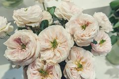 Les roses blanches avec le milieu vert est une sélection originale d'un grand bouquet en vente sur le marché de fleur Variétés mo Image libre de droits