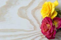 Les roses blanches et rouges sur le blanc ont posé le fond Photo stock