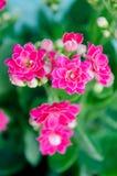 Les roses en pierre Photo stock