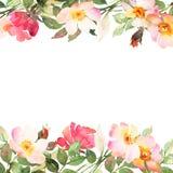 Les roses encadrent la composition décorative Images stock