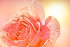 Les roses et l'eau se laisse tomber dans la couleur douce, faite avec le style de tache floue Photos stock