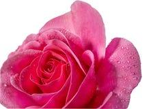Les roses et l'eau se laisse tomber dans la couleur douce, faite avec le style de tache floue Image libre de droits