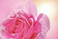 Les roses et l'eau se laisse tomber dans la couleur douce, faite avec le style de tache floue Photographie stock