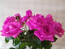 les roses roses fleurissent dans l'arrangement floral pour le cadeau de l'amour Photos stock