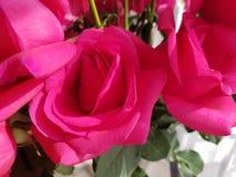 les roses roses fleurissent dans la disposition florale pour le cadeau de l'amour Photo libre de droits