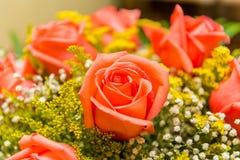 Les roses gentilles dans le concept de célébration Image stock