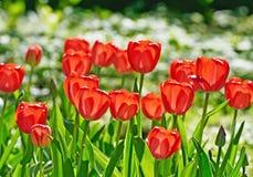 Les roses lumineuses se développent sur le lit de fleur photo stock