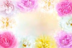 les roses multicolores encadrent le fond dans le ton en pastel avec l'espace de copie pour la valentine Photos libres de droits