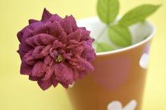 Les roses roses ont arrangé dans un verre rouge avec une forme principale dans un mignon Photos stock