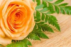 Les roses oranges fleurissent beau frais dedans sur une table Photographie stock