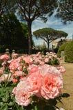 Les roses ornent un beau parc public photographie stock libre de droits