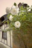 Les roses que la maison couverte de chaume par extérieur yelden yielden le bedfordshi de village photo stock